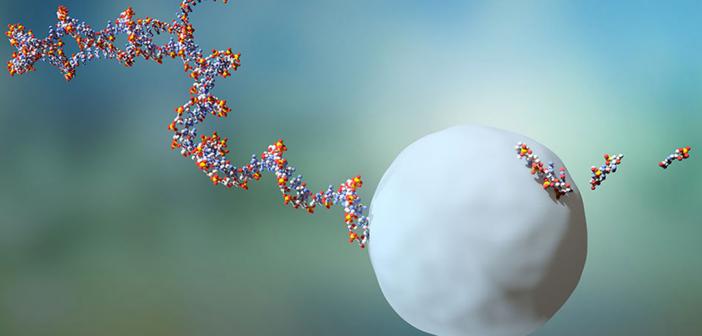 Durchschnittlich existieren RNA-Moleküle zwei Minuten bevor sie von einem Exosom eliminiert werden. © Universität Basel – Biozentrum