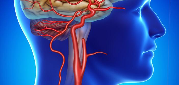 Arterien © Alexilusmedical / shutterstock.com