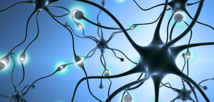 Neuronen, Nervenbahnen, Nervenzellen. © StudioSmart / shutterstock.com