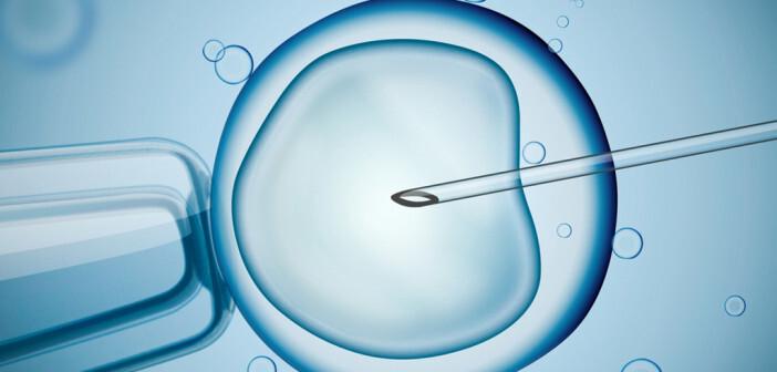 Eizellen – künstliche Befruchtung. © vchal / shutterstock.com