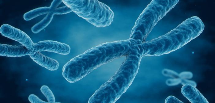 Chromosome © CHIARI VFX / shutterstock.com
