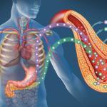Diabetes / Pankreas / Inselzelltransplantation © Alexilusmedical / shutterstock.com