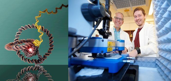 (links): Modell der Nanomaschine: Die beiden ineinandergreifenden Ringe sind gut zu erkennen. In der Mitte befindet sich die T7-RNA-Polymerase. © Julián Valero (rechts): Prof. Dr. Michael Famulok (links) und Dr. Julián Valero im Life & Medical Sciences (LIMES)-Institut der Universität Bonn am Rasterkraftmikroskop. © Volker Lannert / Uni Bonn