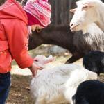 Kinder am Bauernhof erkranken seltener an Neurodermitis. © Jenoche / shutterstock.com