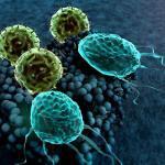 T-Lymphozyten attackieren Krebszellen, Checkpointinhibitoren sollen das verhindern und die Tumoren »verstecken. © UGREEN 3S / shutterstock.com