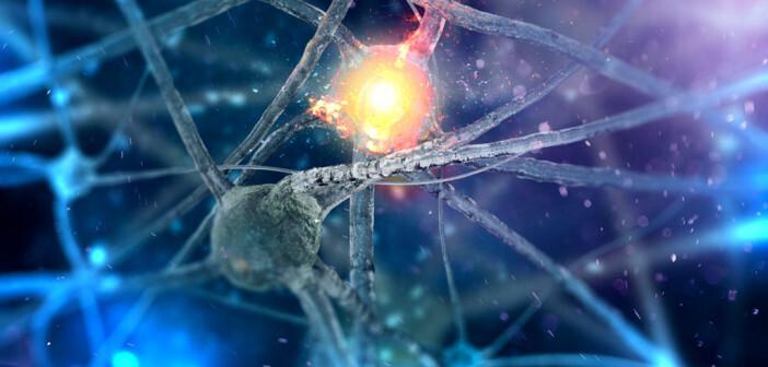 Nervenfasern © Andrii Vodolazhskyi / shutterstock.com