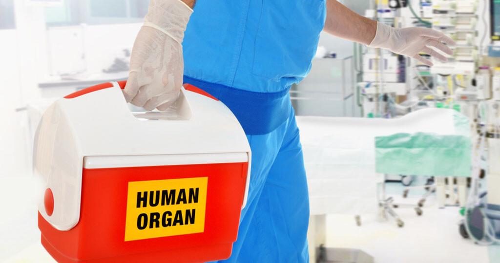 Spenderorgane / Transplantation / Organspende © Dan-Race / shutterstock.com