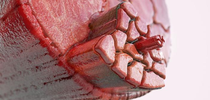 Muskel, Muskelfaser: Muskelfaser-Riss uns Muskelfaser-Zerrung sind im Sport sehr häufig. © Crevis / shutterstock.com