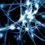 Nerven / Neuronen © Giovanni Cancemi / shutterstock.com