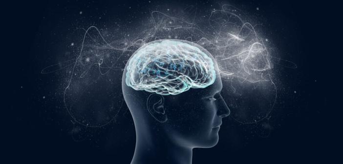 Gehirn / Kapazitäten / kognitive Leistung © vitstudio / shutterstock.com