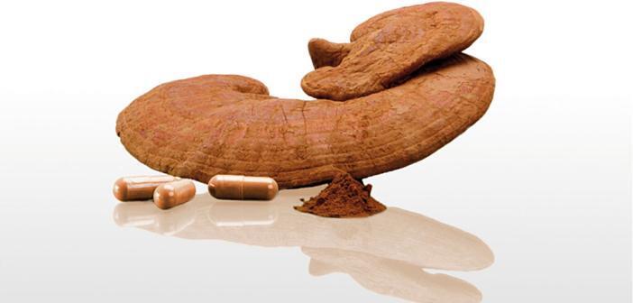 Vitalpilze wie hier der Reishi werden seit jeher wegen ihrer Bedeutung für das Wohlbefinden geschätzt. © SEEWALD