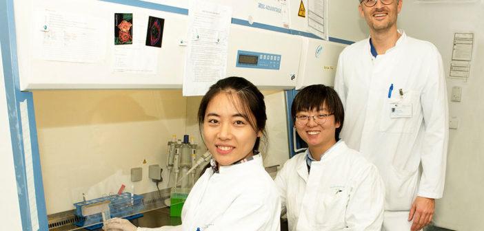miRNA-92a stärkt das Herz. Im Labor: (von links) Qian Li, Yangyang Liu und Dr. Felix Jansen. © Katharina Wislsperger / UKB