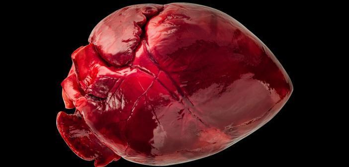 Xenotransplantation mit schweineherzen © Studi8Neosiam / shutterstock.com