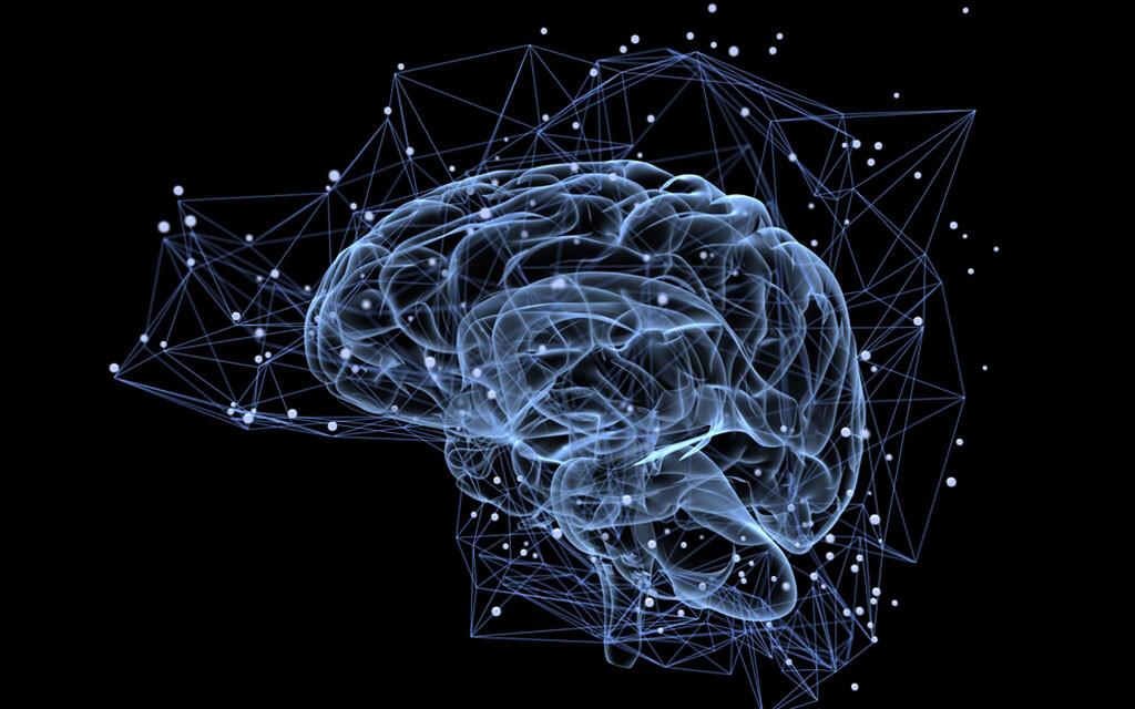 Gehirn © Tatiana Shepeleva / shutterstock.com