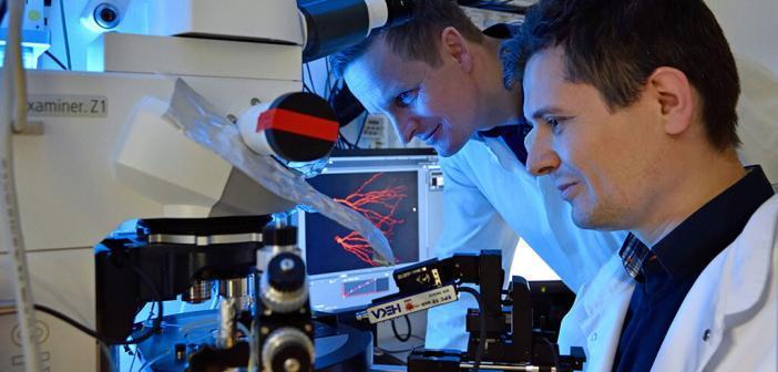 Nach Schlaganfall vermehrt gebildete Nervenzellen sind nicht ausgereift und fehlerhaft vernetzt, so Dr. Albrecht Kunze (l.) und Mihai Ceanga vom Uniklinikum Jena. © Michael Szabó / UKJ