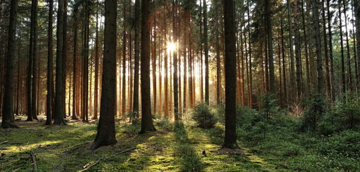 Waldbaden, japanisch Shinrin-yoku –bringt angenehme, wohltuende Effekte. © N K / shutterstock.com