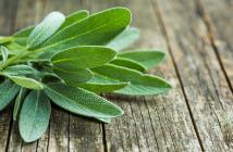 Salbei – Salvia officinalis © Jiri Hera / shutterstock.com