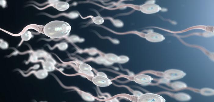 Spermien © Christoph Burgstedt / shutterstock.com