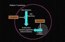 Schematische Darstellung eines malignen T-Lymphozyten des Sézary-Syndroms: Unter der Kombinationstherapie mit Sorafenib und Vorinostat ist ein massives Absterben der Tumorzellen zu beobachten. © PD Dr. Karsten Gülow