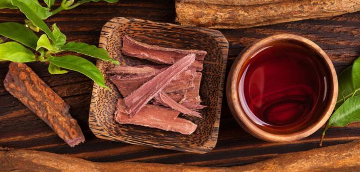 Ayahuasca-Tee aus der Dschungelliane Banisteriopsis caapi ist eine beliebte Halluzinogen-Droge von Schamanen. © Eskymaks / shutterstock.com
