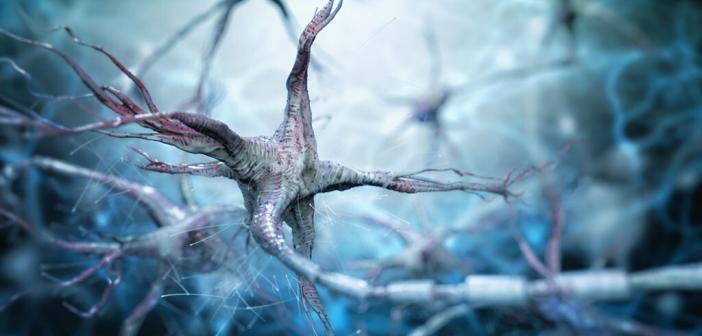 Neuroplastizität beschreibt die Fähigkeit des Gehirns, seine Strukturen nach Schädigungen ändern zu können. Adike / shutterstock.com