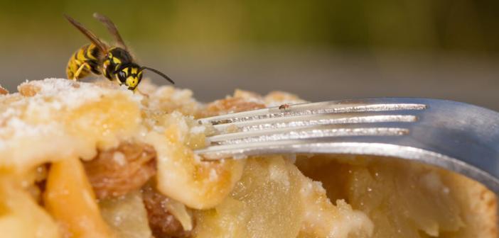 Einfache Hausmittel gegen Insektenstiche können im Ernstfall sogar Leben retten. © Hellwig / shutterstock.com