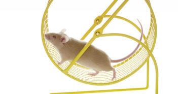 Mit dem Training im Laufrad konnten Mäuse ihre Herzmuskelzellen regenerieren. © Robynrg / shutterstock.com