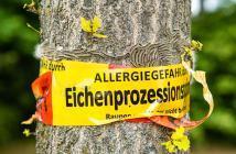 Gefahr Eichenprozessionsspinner – seine Gifthaare können dem Menschen große gesundheitliche Probleme bringen. © Nicole Lienemann / shutterstock.com