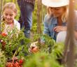 Der eigene Garten kann zum Paradies werden. © Lucky Business / shutterstock.com