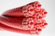 Querschnitt durch einen Herzmuskel mit sichtbaren Muskelfasern © Crevis / shutterstock.com