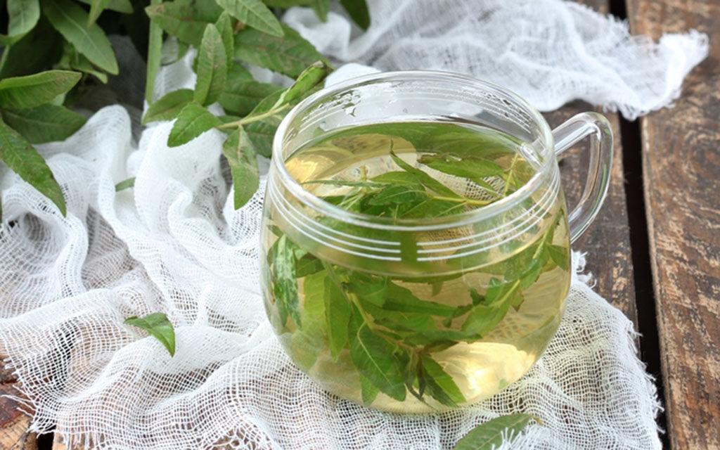 Zitronenverbene-Tee und Zitronenverbene-Sirup sind einfache effektive Anwendungen der südamerikanischen Heilpflanze. © Viktoria Hodos / shutterstock.com