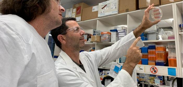 Professor Mark Schembri und Associate Professor Scott Beatson arbeiten an einer Lösung für wiederkehrende Harnwegsinfekte. © University of Queensland