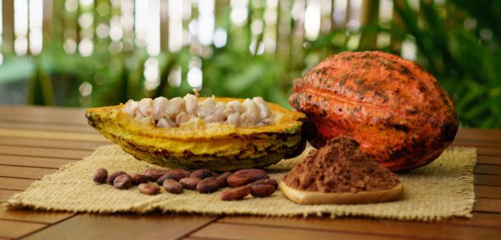 Kakaofrucht, Kakaobohnen, Kakaopulver. © Von Saulyak Sergey / shutterstock.com