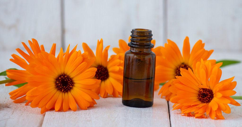 Die Ringelblume zeigt als Ringelblumentinktur bei Zahnfleischentzündungen gute Wirkung. © Inga Gedrovicha / shutterstock.com