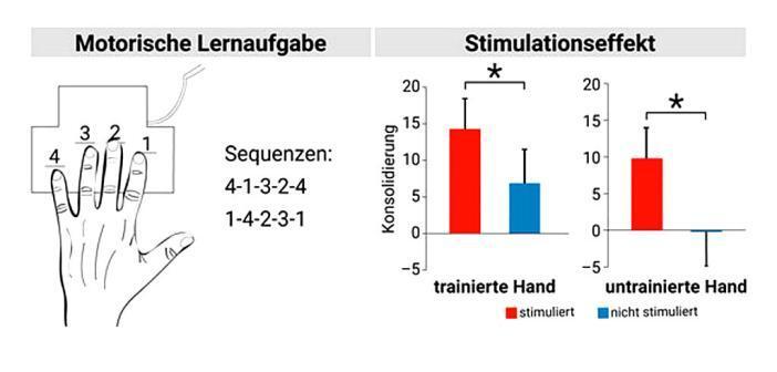 Wenn das Gehirn in den Pausen zwischen den kurzen Übungseinheiten eine Stimulation bekamen, konnte die geübte Zahlen-Abfolge mit der trainierten Hand besser abgerufen werden. © MPI CBS/Jost-Julian Rumpf