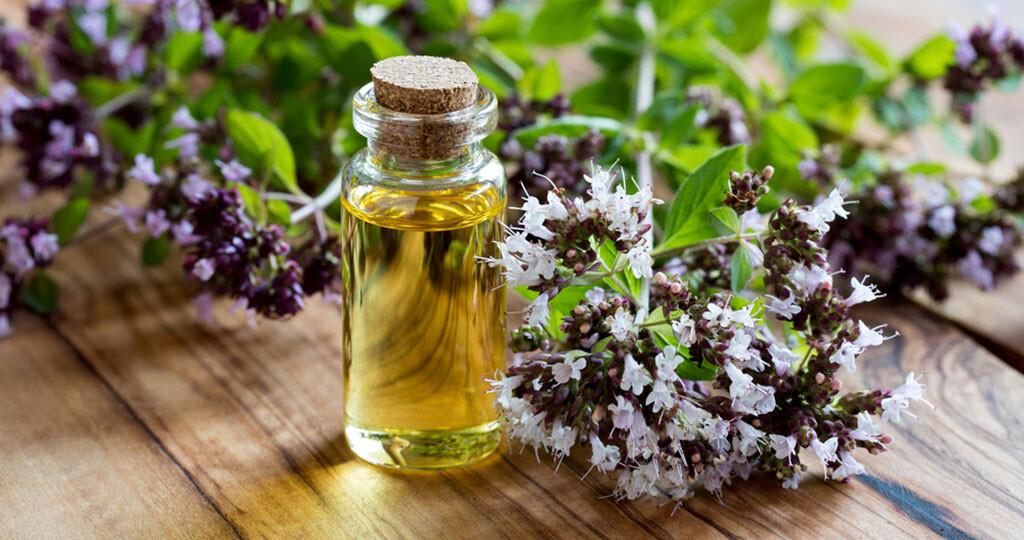 Wilder Dost und Ätherisches Öl dieses Wilden Oregano © Madeleine Steinbach / shutterstock.com
