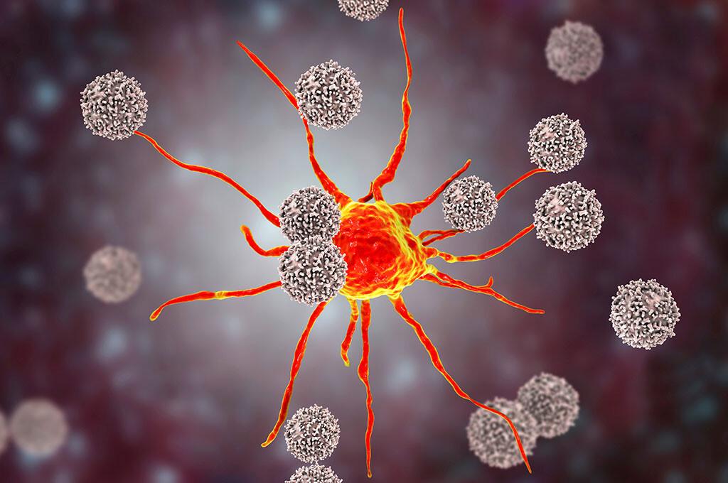 T-Killerzellen attackieren eine Krebszelle, nachdem die von B-Zellen mittels Antikörper markiert wurde. © Kateryna Kon / shutterstock.com