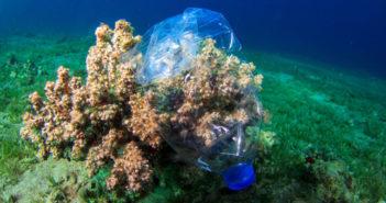 Nicht nur Plastikflaschen sind ein Problem. Sondern vor allem das Mikroplastik im Meer schädigt viele Korallen. © Jenny Lord / shutterstock.com