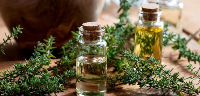 Thymian und sein ätherisches Öl Madeleine hilft auch bei Diabetes. © Steinbach / shutterstock.com
