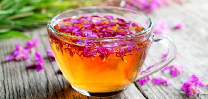 Weidenröschen-Tee hilft bei Entzündungen der Prostata oder der Blase. © Chamille White / shutterstock.com