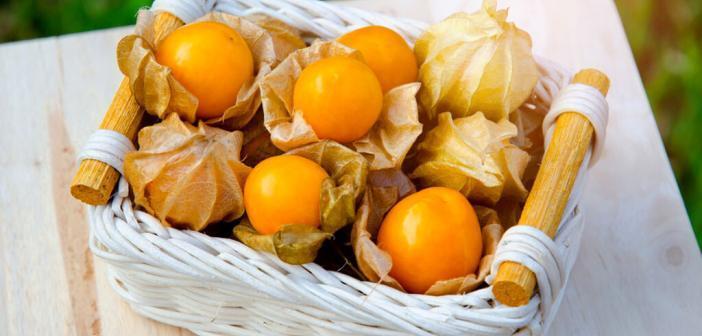 Physalis ist nicht nur dekorativ, sondern auch gesund. © Slipper Prince / shutterstock.com