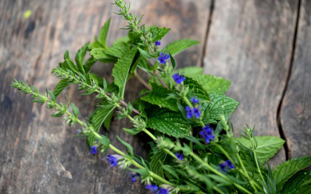 Die Wirkung von Ysop als Heilpflanze ergibt sich aufgrund zahlreicher Inhaltsstoffe der Gewürzpflanze. © Sarah Biesinger / shutterstock.com