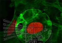 Dank der gezielten Entfernung von über 1'300 Genen im Plasmodium-Parasiten (hier in rot, Wirtszellen in grün), konnten die Forschenden hunderte Schwachstellen des Malaria-Erregers identifizieren. © Institut für Zellbiologie, Universität Bern