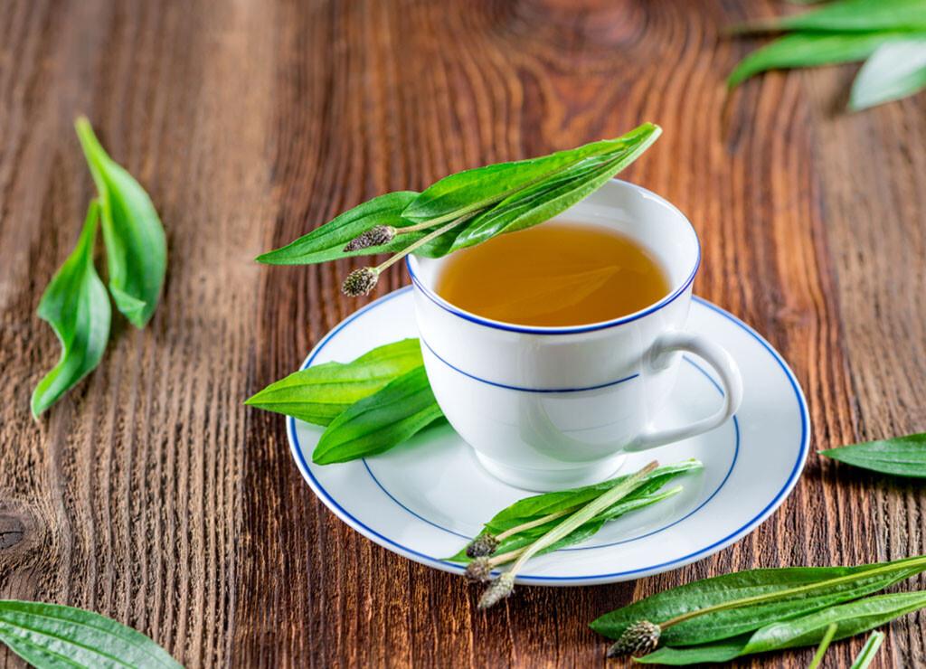 Der Spitzwegerich-Tee ist eine begehrte Art, die Wirkung der Heilpflanze zu genießen. © HETIZIA / shutterstock.com