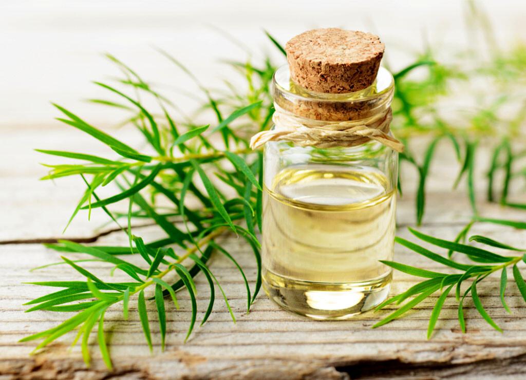 Das Teebaumöl des Australischen Teebaums bringt vor allem gesundheitliche Wirkungen für die Haut, hilft aber auch gegen zahlreiche andere Beschwerden. © AmyLv / shutterstock.com